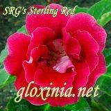 SRG's Sterling Red