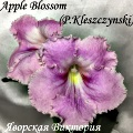 Aplle Blossom