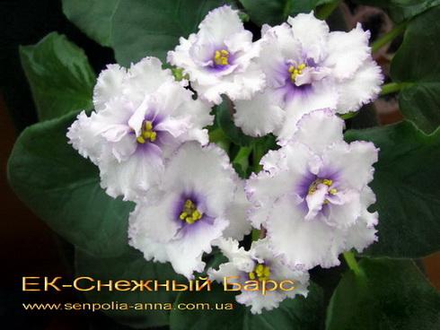Цветок в транскрипции