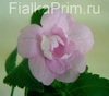 Ахименес Double Pink Rose